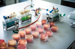 Berry juice processing by-products could reduce the risk of cancer